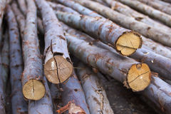 Eucalyptus wood pile Royalty Free Stock Photos