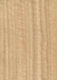 Eucalyptus wood veneer texture Stock Images