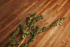 Eucalyptus on wooden table Stock Image