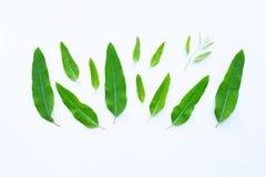Eucalyptusbladeren op wit royalty-vrije stock afbeeldingen