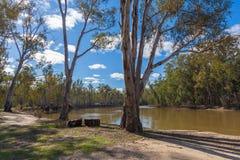 Eucalyptusbomen die op banken van Murray River, Australië groeien royalty-vrije stock foto's