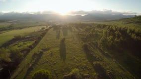 Eucalyptusgebied, de zonsondergang van de Hommelmening in de bergen, pastorale en zonsondergang stock videobeelden