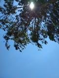 Eucalyptusschaduw stock foto