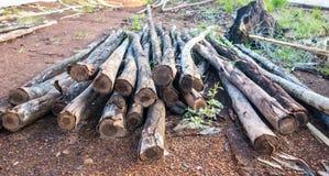 Eucalypyus-Holz stockbild