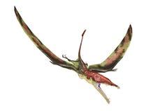 Eudimorphodon flying prehistoric reptile, photorealistic represe Royalty Free Stock Photography