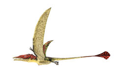 Eudimorphodon flying prehistoric reptile, photorealistic represe. Ntation, scientifically correct. Side view, On white background. Clipping path included Stock Photo
