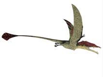 Eudimorphodon over White Stock Image