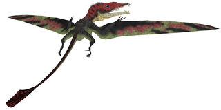 Eudimorphodon profile on White Stock Photo