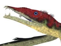 Eudimorphodon Pterosaur Head stock photography
