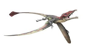 Eudimorphodon 2 Royalty Free Stock Photo