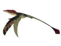 Eudimorphodon Wings Down Stock Photo