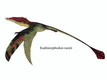 Eudimorphodon Wings Down with Font Stock Photo