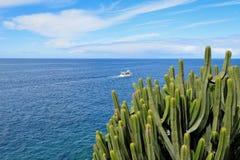 Euforbia dell'Isole Canarie dal mare Fotografie Stock Libere da Diritti