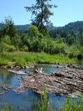 Eugene Oregon Stock Image