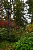Eugene, Oregon - 2018_10.06: Colorful autumn foliage, flowers and lamp post in Hendricks Park royalty free stock photos