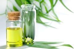 Eukaliptusów istotni oleje w szklanej butelce, oganic ziołowy aromath zdjęcie royalty free