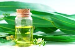 Eukaliptusów istotni oleje w szklanej butelce, oganic ziołowy aromath Zdjęcie Stock