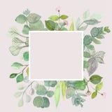 Eukaliptusów liście na białym tle Rama robić eukaliptusowe gałąź Mieszkanie nieatutowy, odgórny widok, kopii przestrzeń ilustracja wektor