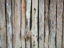 Eukaliptusowego drewna ustalony vertical Zdjęcia Royalty Free