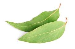 Eukaliptusowi liście Zdjęcia Royalty Free