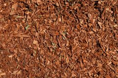 Eukaliptusowy chochoł textured tło fotografia stock