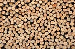 eukaliptusowy drewno Obraz Royalty Free
