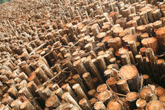 eukaliptusowy drewno Fotografia Royalty Free