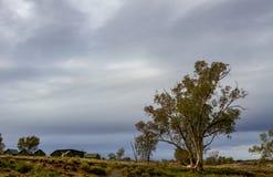 Eukalypten und Zeltplätze bei Glen Helen Gorge stockbilder