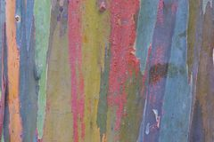 Eukalyptus-Barke Lizenzfreie Stockbilder