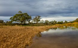 Eukalyptus nahe dem Glen Helen Gorge-waterhole lizenzfreies stockbild