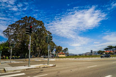 Eukalyptus in San Francisco lizenzfreie stockfotos