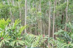 Eukalyptus und Ginger Flowers lizenzfreie stockfotografie