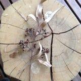 Eukalyptus weg vom Schnitt Stockfotografie