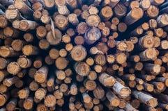 Eukalyptusabschnitt Lizenzfreies Stockfoto