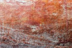 Eukalyptusbaumrindebeschaffenheit Heller, natürlicher Hintergrund Stockfoto