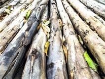 Eukalyptusbeschaffenheit stockfotos