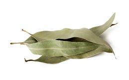 Eukalyptusblätter Stockbild