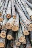 Eukalyptusholz Stockfoto