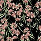 Eukalyptusniederlassung witn Muster des Aquarells nahtlose Hand gezeichnete Abbildung Lizenzfreies Stockbild
