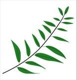 Eukalyptussidor royaltyfri illustrationer