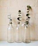 Eukalyptussidor i flaskor Royaltyfri Fotografi