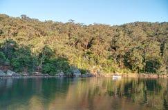 Eukalyptusskog och flod på solig dag Royaltyfri Foto