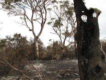 Eukalyptusstubben är all som lämnas royaltyfri bild