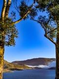 Eukalyptusträd inramar behållaren Arkivfoton