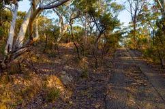Eukalyptusträd längs en kasserad elasticitet av vägen Arkivfoton