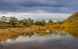 Eukalyptusträd och vasser på vattenhålet på Glen Helen Gorge royaltyfria bilder