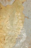 Eukalyptusträdskäll Arkivfoto