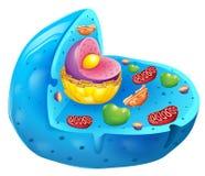 Eukaryotic клетка Стоковое Изображение