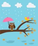 Eule in der Regenzeit Stockfotografie