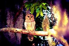 Eule in einem Baum Stockbilder